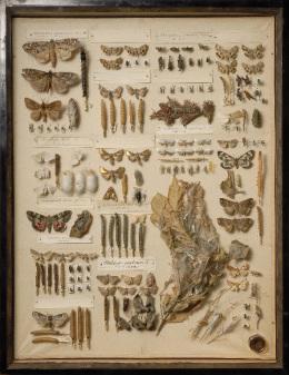 ガ類生態標本