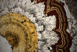 閃亜鉛鉱(黄~濃褐色部)と菱マンガン鉱(透明部)の成長組織(稲倉石鉱山産Mn鉱石)