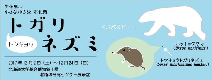 生体展示「小さな小さなホ乳類 トウキョウトガリネズミ」