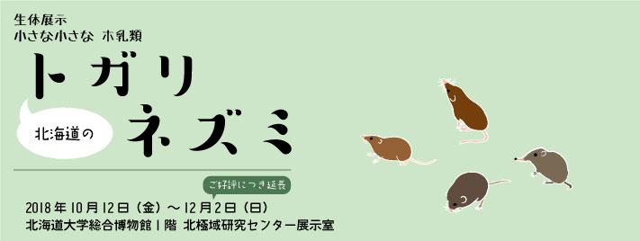 【会期延長】生体展示「小さな小さなホ乳類  北海道のトガリネズミ」