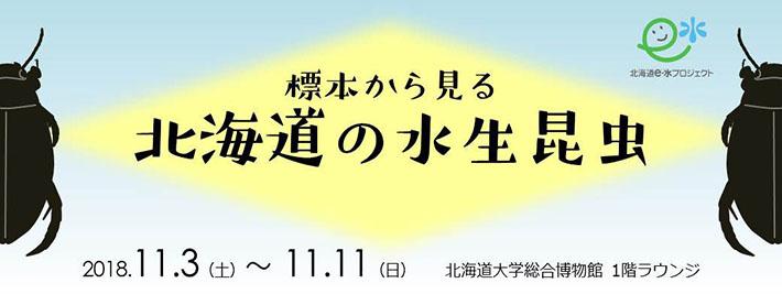 ミニ展示「標本から見る北海道の水生昆虫」