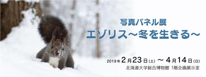 「写真パネル展 エゾリス~冬を生きる~」